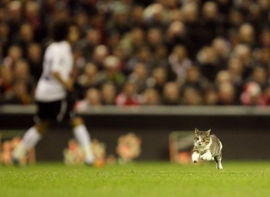 The Anfield Cat heads goalwards on Monday night