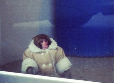 The monkey. Pretty snazzy coat eh?