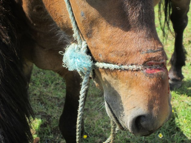 Sligo Man Charged With Keeping A Pony Tied Up For So Long