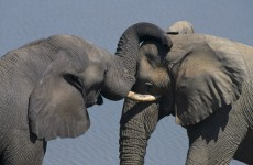 More than 300 elephants deliberately poisoned in Zimbabwe park