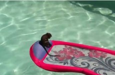 You don't enjoy anything as much as this baby monkey enjoys swimming