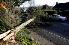 One per cent of ALL the trees in Ireland's forests fell down in the storms